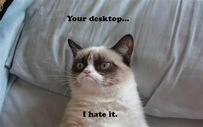 Funny Cat Wallpapers Desktop Pc Laptop 4k