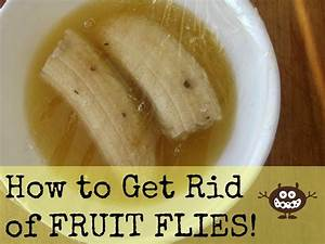 the easiest way to get rid of fruit flies diy bug With how to get rid of water bugs in bathroom