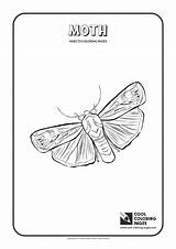 Moth Coloring Pages Cool Print Animals Insects Butterfly Mm Wingspan Different Fly sketch template