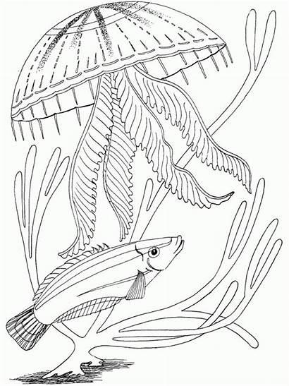 Coloring Ocean Pages Fish Adult Printable Underwater
