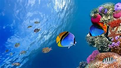 Ocean Scenes Wallpapertag