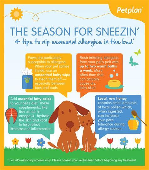 Best Pet Care Images On Pinterest Pet Health Pet