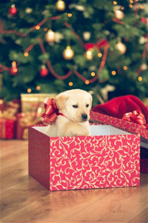 holiday safety tips  dogs doghealthcom