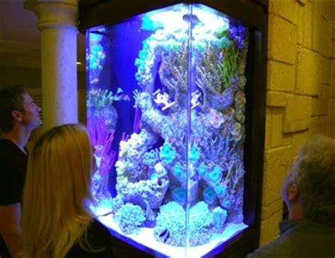 les rois des aquariums a la recherche du poisson
