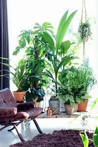 Bilder Feng Shui : feng shui pflanzen ber die schutz und komfortfunktion der zimmerpflanzen ~ Sanjose-hotels-ca.com Haus und Dekorationen