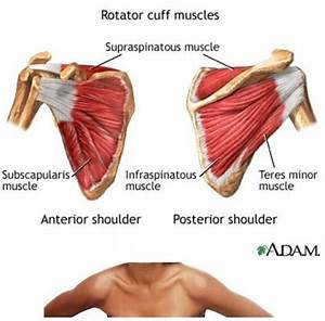 How To Stop Torn Rotator Cuff Shoulder Pain