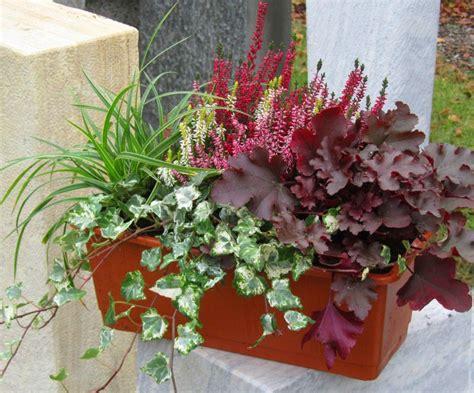 herbstbepflanzung balkon winterhart bepflanzter blumenkasten 40 cm wintergr 252 n garten