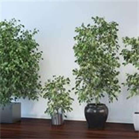 piante da appartamento resistenti piante appartamento piante
