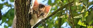 Flöhe Bei Katzen Bekämpfen : w rmer bei katzen verbreitung symptome therapie ~ Orissabook.com Haus und Dekorationen