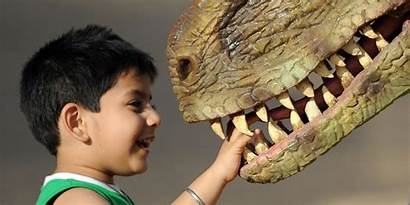 Dinosaur Favorite Kid Child Poll Huffpost Surprising