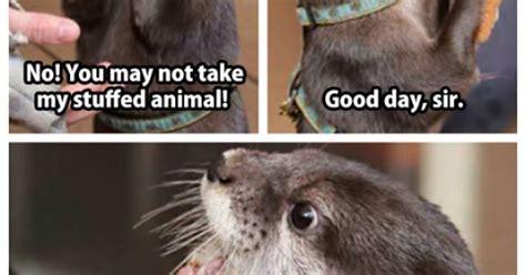 Good Day Sir Meme - awww he really loves his stuffed animal animals