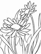Coloring Daisies Bunga Flowers Gambar Margaritas Draw Spring Flower Daisy Flores Untuk Mewarnai Dibujos Wiosna Anak Pintar Desenhos Til Marimewarnai sketch template
