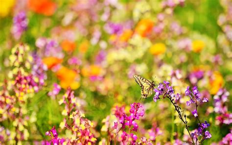 We have a massive amount of hd images that will make your. 48+ Beautiful Butterflies and Flowers Wallpapers on WallpaperSafari