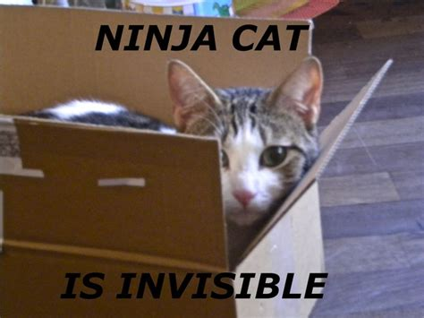 Ninja Cat  Memes And Other Similar Stuff I Made Pinterest