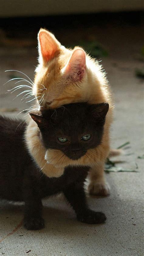 Die Besten 25+ Katzen Ideen Auf Pinterest Katzenbabys