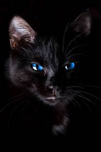 black cat with blue eyes | Cats | Pinterest | Cats, Blue ...