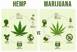 Hemp Vs Marijuana  A Beginner U0026 39 S Guide