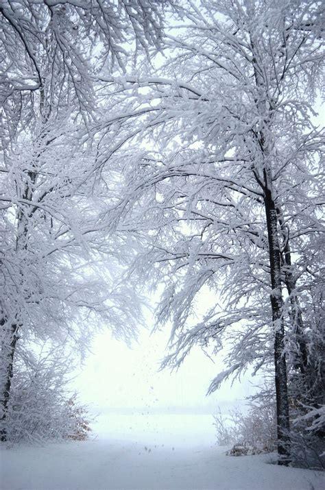 Winter Wonderland Wallpapers Wallpapersafari