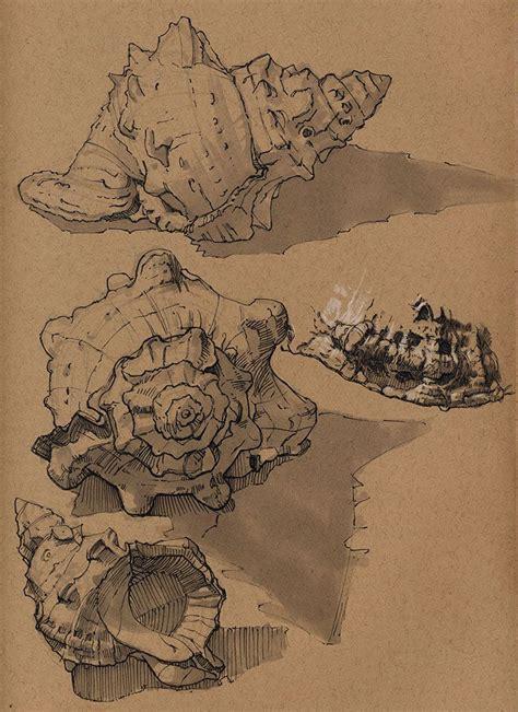 Artstation Seashells Floris Van Der Peet Sketchbooks