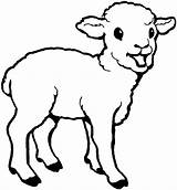 Sheep Coloring Pages Cute Printable Lamb Template Animal Baby Children sketch template