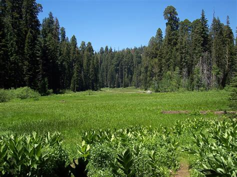 crescent meadow  sequoia national park california image