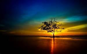 Tree lonely sunset sunrise landscape nature sun reflection ...