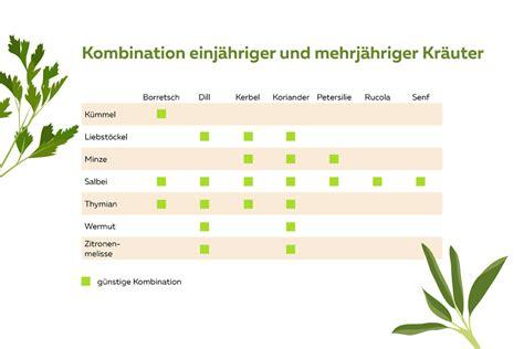 welche pflanzen vertragen sich tabelle welche kr 228 uter passen nicht zusammen kr 228 uter die sich vertragen selbstversorger de
