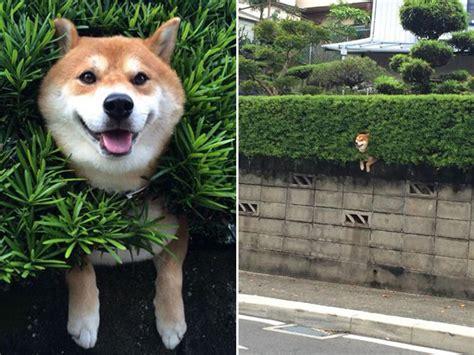 animals   stuck  pretend   fine