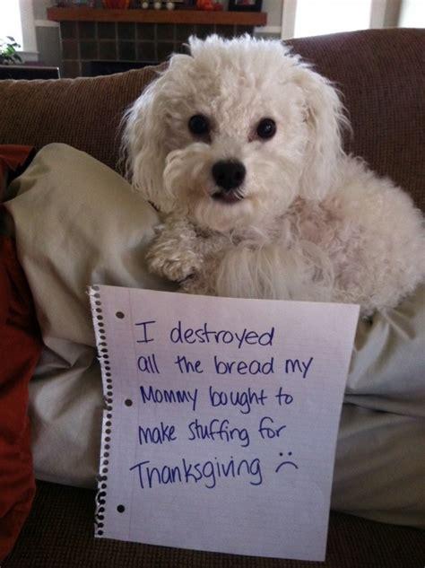 dogs  ruined thanksgiving dinner