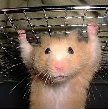 Hamster Jongen Een Het Dierenvriend Schellekens Piet
