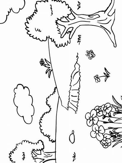 Coloring Summer Pages Nature Printable