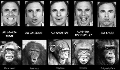 human lie detector paul ekman decodes  faces