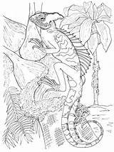 Coloring Pages Basilisk Lizard Mia Template Onchao Popular sketch template