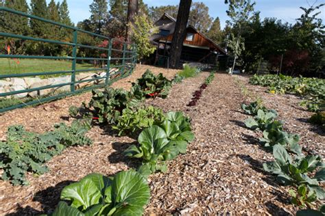 back to gardening touring a quot back to quot garden peak prosperity