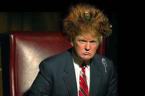 trump donald funny hair meme memes woman funniest laugh very nest thinking bird standing pence trumps hate speech comedy fun