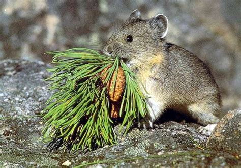 Common Plants, Animals Threatened By Climate Change, Study