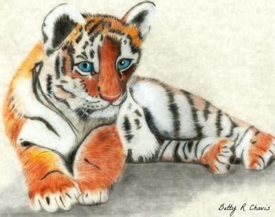 colored pencil drawing  tiger cub