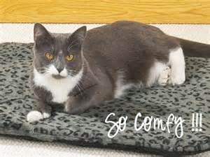 cat heating pad self heating pet pads fleaseason fleaseason