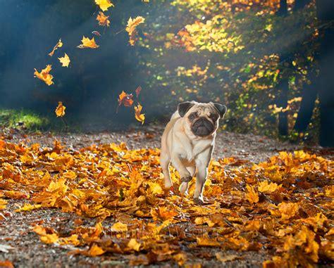 Garten Wässern Im Herbst by Monika Wegler Tierfotografin Und Autorin