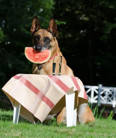 vegane hundeernaehrung wirklich sinnvoll hundede