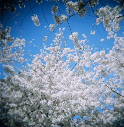 Animated Flowers 3d Sky Giphy Gifs Cherry
