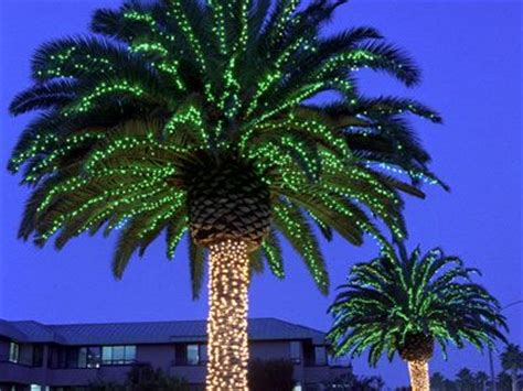 palm trees with christmas lights palm trees pinterest