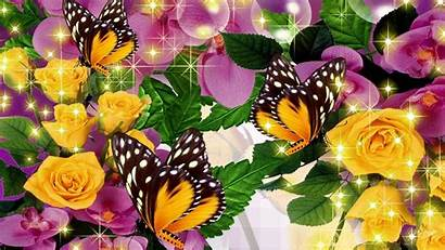 Bright Colors Colorful Wallpapers Flowers Butterflies Flower