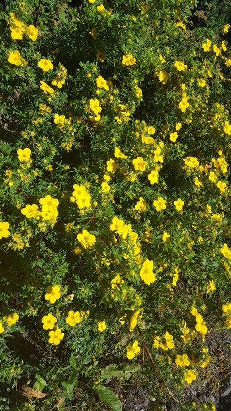 fiori ricanti resistenti al freddo piante resistenti al freddo le variet 224 da coltivare