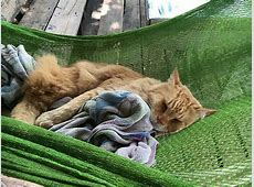 Free photo Cat, Cat In Hammock, Sleeping Cat Free Image