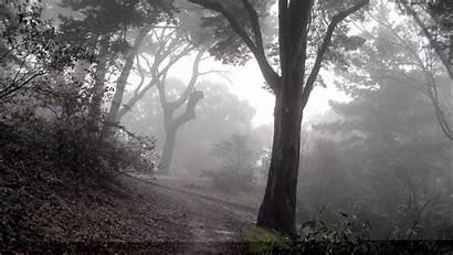 Dark Woods Backgrounds Pixelstalk