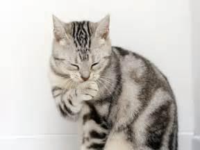 cat animal cat collection domestic animals wallpaper 5353358 fanpop