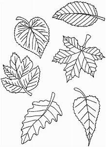 Feuilles D Automne à Imprimer : coloriages de automne ~ Nature-et-papiers.com Idées de Décoration