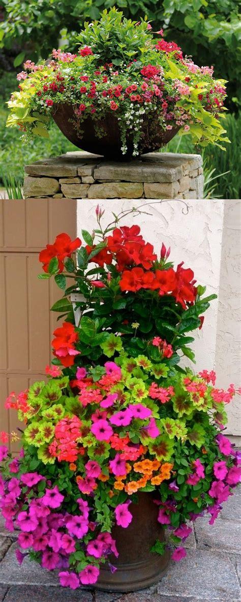 Best 25 Container Gardening Ideas On Pinterest