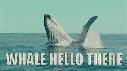 Hello There Whale Gifs Hi Funny Puns